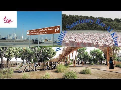 Wildlife Sanctuary Ras Al Khor Dubai