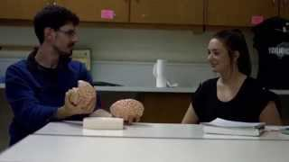 Grenfell Campus Bachelor of Arts or Science - Psychology