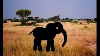 Słoń tańczy na sawannie