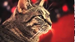 Мяукает в такт тяжелому року Метал Хард   очень музыкальный кот Прикол Живо