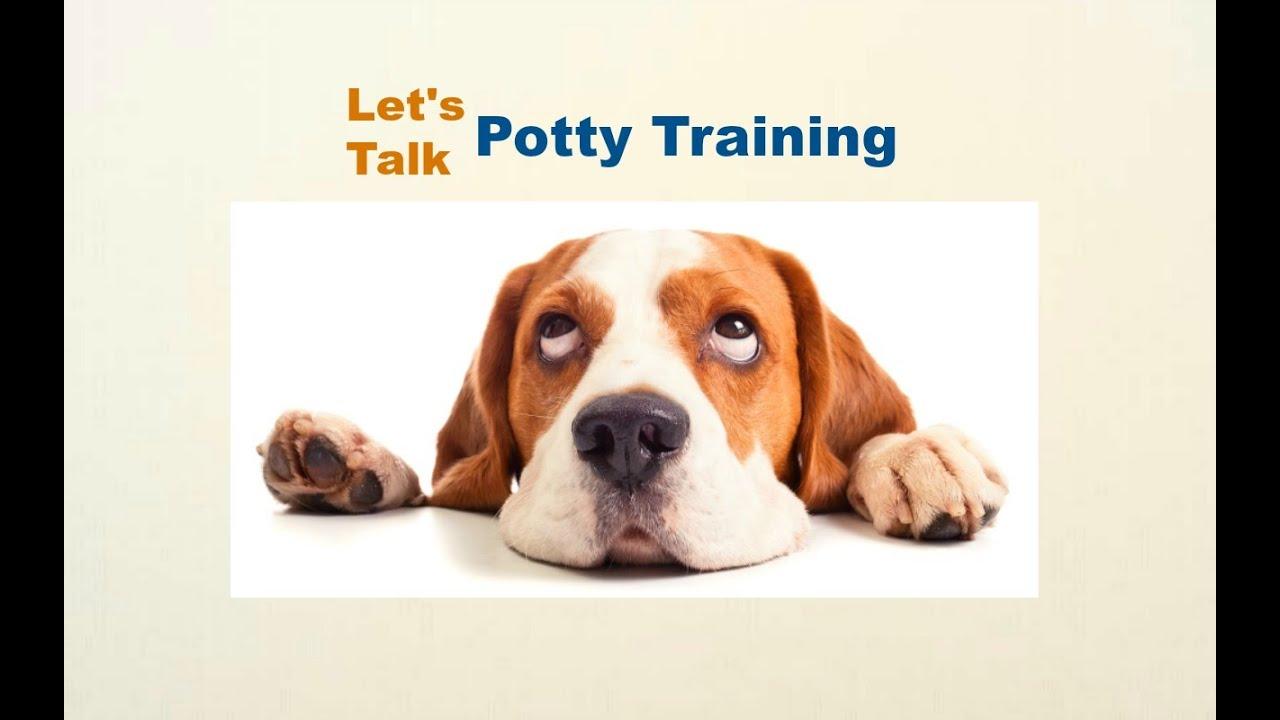 Beagle Puppy Potty Training, How To Potty Train My Beagle Puppy ...
