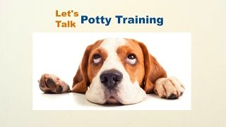 Beagle Puppy Potty Training, How To Potty Train My Beagle Puppy