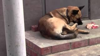 Собака против лапы.