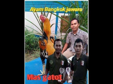 Ayam Jawara Bangkok Mas Gatot