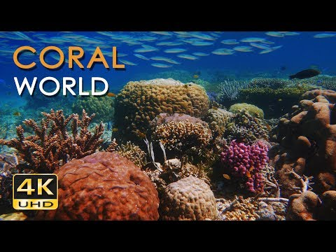 4K Coral World - Tropical Reef Fish - Relaxing Underwater Ocean  & Sounds - No Loop - Ultra