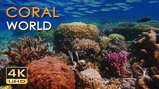 4K Coral World - Tropical Reef Fish - Relaxing Underwater Ocean Video & Sounds - No Loop - Ultra HD
