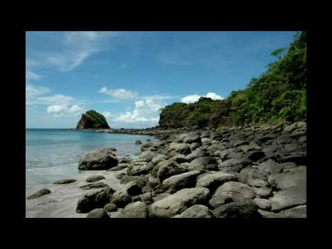 Tropical Rainforest Nature Sound Singing Birds Ambience and relaxing ocean