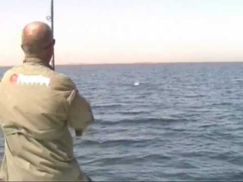 Nile perch heaven lake nasser egypt how to lose a big for Lake of egypt fishing report