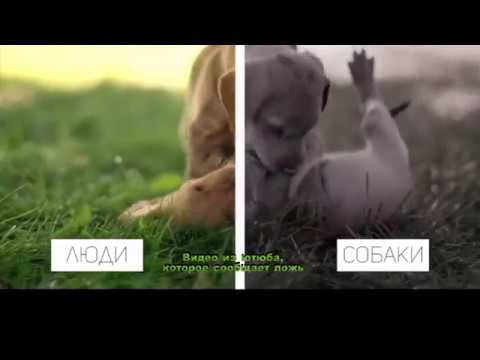 Органы чувств собак. Зрение. Как собаки видят мир?