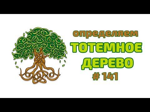 Как определить тотемное дерево  Энергетика деревьев   Какое ты дерево - Ретрит весна 2019.