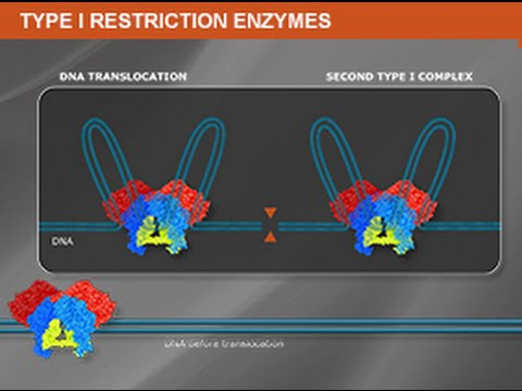 Type I Restriction Enzymes