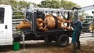 Самые необычные машины в мире! Мегамашины