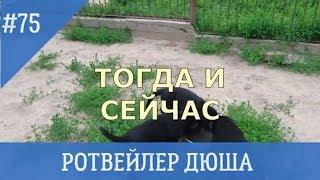 РОТВЕЙЛЕР ДЮША,ТОГДА И СЕЙЧАС дрессировка ивоспитание собак
