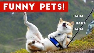 The Funniest Cute Pet Home Video Fails Weekly Compilation September 2016   Funny Pet Videos