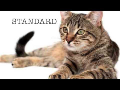 Selective Breeding | Munchkin Cats