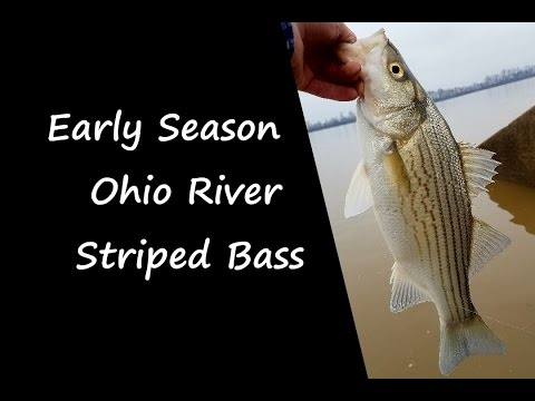 Early Season Ohio River Striped Bass