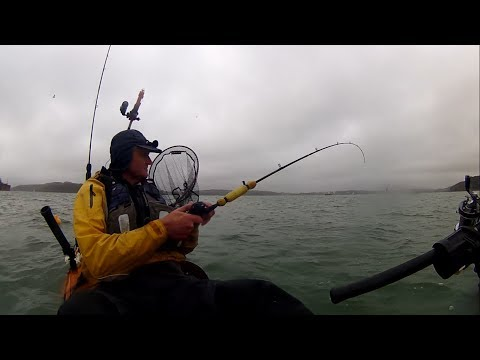 Kayak Fishing - COD, MACKEREL, SQUID, HERRING, WHITING, BULL HUSS - Multi Species Fishing