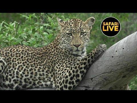 safariLIVE - Sunrise Safari - February 26, 2019