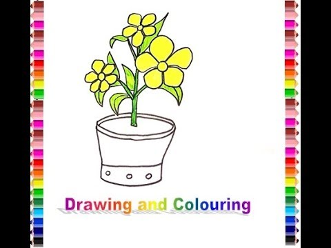 How To Draw And Colouring Alamanda Flower Gambar Bunga Alamanda