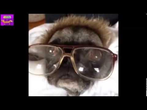 Животные » Видео приколы онлайн смотреть бесплатно. Самые