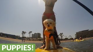 Movie dog goes on paddle board adventure with owner