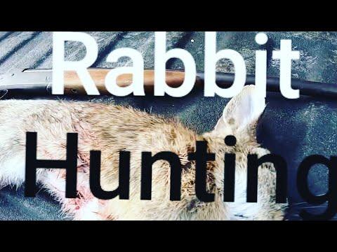 Rabbit And Squirrel Hunting In Va