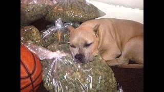 Ноггано - Собака съела товар ☣