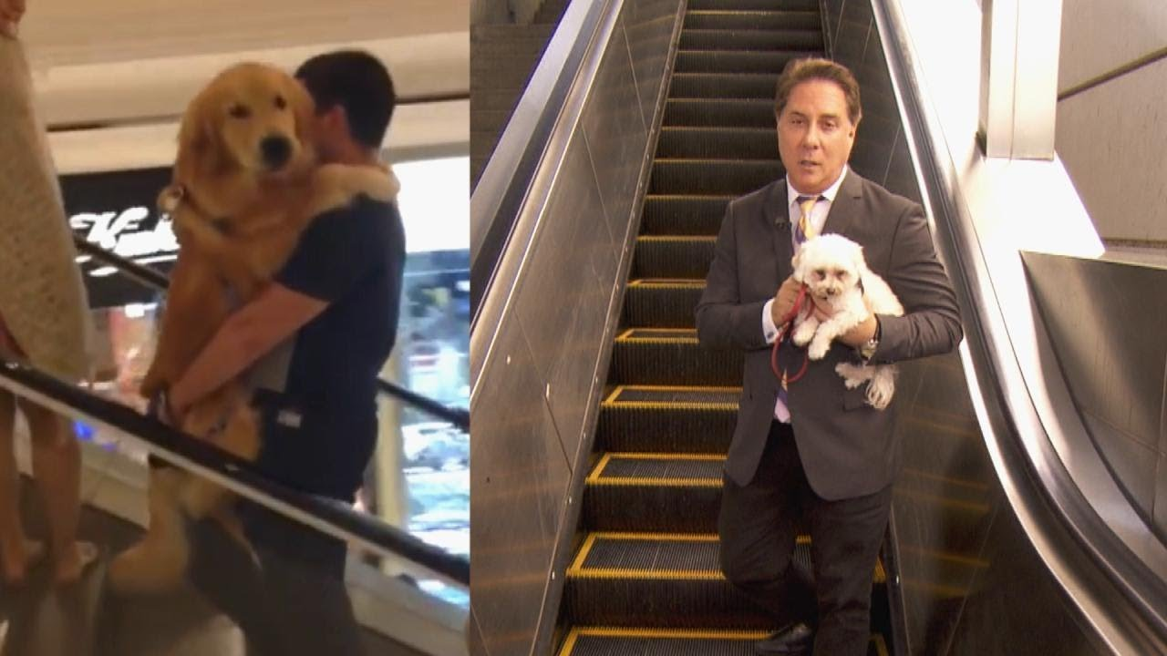The Dangers of Dogs on Escalators