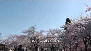 365日(オルゴールVer.)の視聴動画