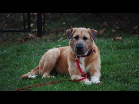 POMH Rescue Dogs 2015