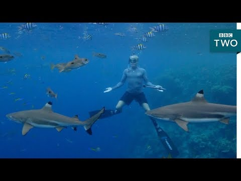 Free diving with sharks  Tribes, Predators and Me: Series 2 Episode 1 P  BBC Two