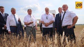 Визит Александра Лукашенко в Миорский район
