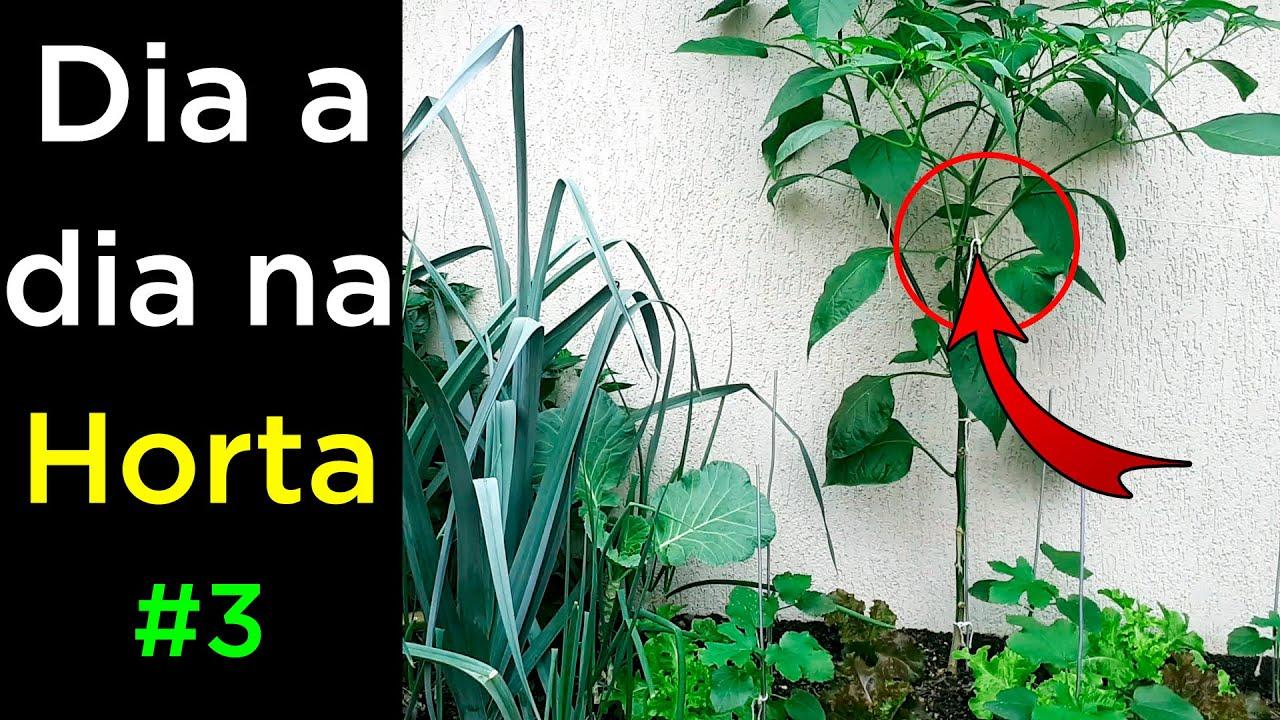 Horta em Casa #03 Colheita Tutoramento e Poda