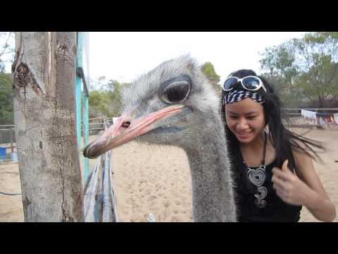 riding on ostrich back, Vietnam