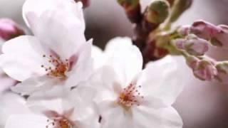 Ave Maria --Harmonica