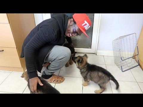 GETTING A DOG