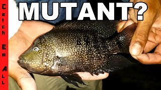 FISH MUTANT CAUGHT in TOXIC WATERS?!