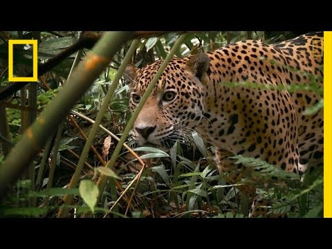 Wildlife Trafficking - We're a Planet at the Crossroads | National Geographic