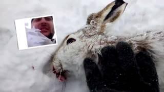 Зимняя охота с дратхааром на зайца