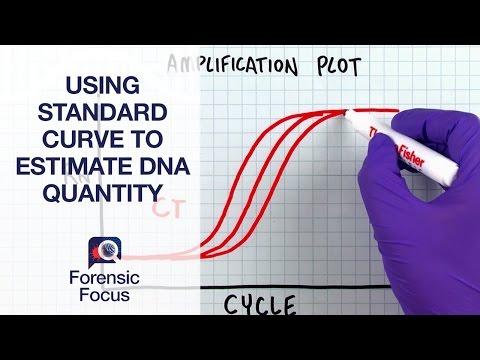 Using Standard Curve to Estimate DNA Quantity