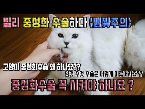 [고양이 중성화수술!!!!] 릴리 중성화수술 하다 ㅠㅠㅠㅠㅠ ♥혜서니♥
