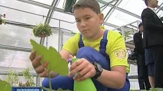 Экостудия и большая теплица: учеников специальной школы-интерната в х. Николаевский обучают агроделу