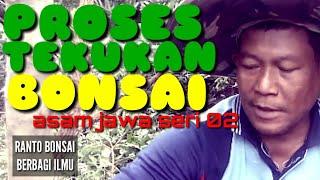 belajar-bonsai-tekukan-seri-2-bersama-pak-ranto-bonsai-