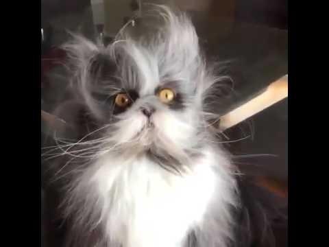 Как выглядит ешкин кот фото