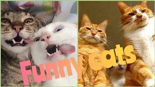 крутые котики приколы смешная подборка видео про котов