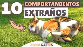 ¿Es tu gato normal?  10 COMPORTAMIENTOS EXTRAÑOS explicados