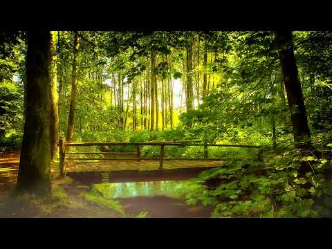 Beautiful Peaceful Ringtone Alarm | Free Ringtones Download