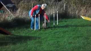 Purbeck Agility Group - Small Dog Agility
