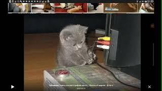 Самые смешные коты картинки!