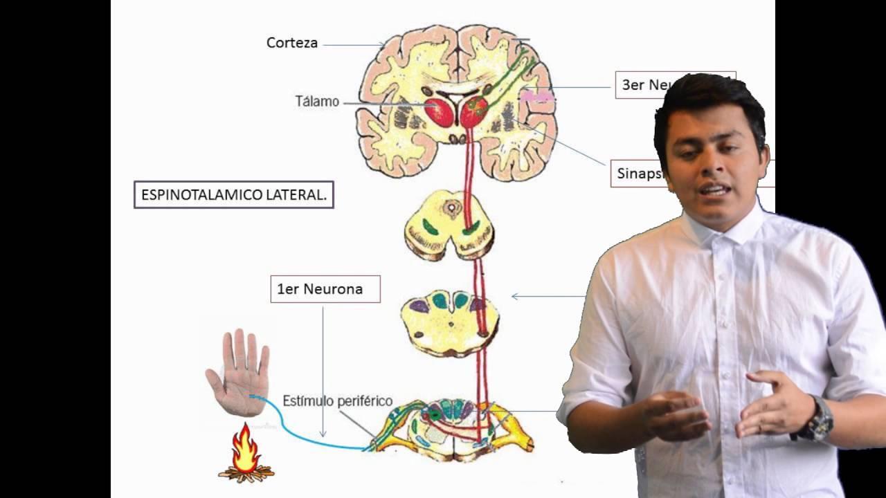 Fisiología del dolor - YouTube